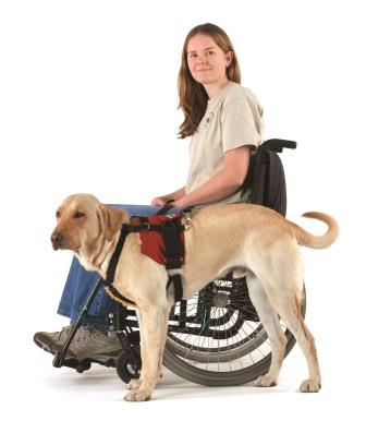 picture of girl in wheelchair with service dog